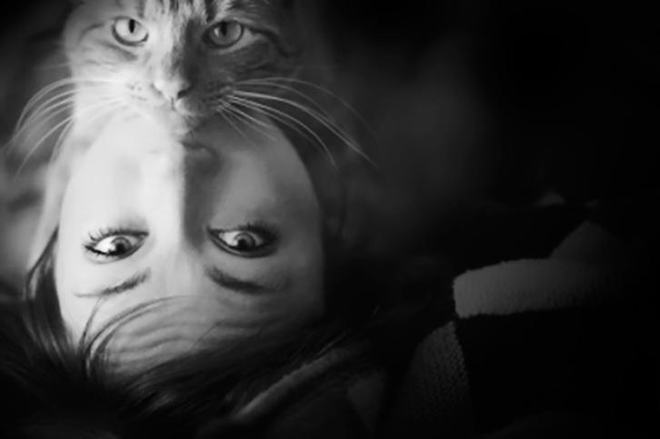 la-curiosidad-mato-al-gato